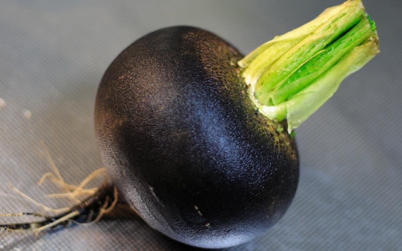Czarna rzepa na cellulit.